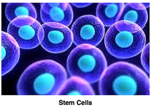 Stem Cell Medicine taught at Blue Marble University Medical School, Commonwealth of Dominica. MD degree academically equivalent to a traditional US medical school. Online MD degree for non-clinical careers in medicine. Interesting and novel medical courses taught at Blue Marble Online Medical School